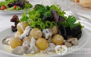 Грузди белые — польза, употребление, калорийность