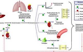 Гормон ангиотензин: синтез, функции, блокаторы рецепторов
