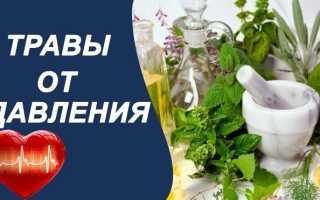 Растение от гипертонии: лечебные сборы и народные рецепты