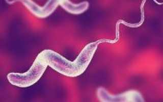 Кампилобактериоз – симптомы, лечение, формы, стадии, диагностика