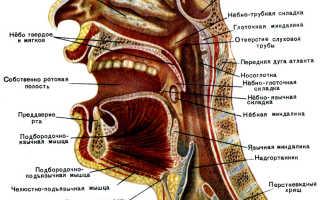 Носовая полость — строение, функции